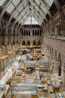 Oxford University Museum of Natural History 1