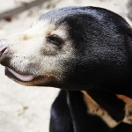 Bear Rescue Centre in Phnom Penh