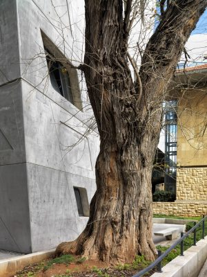 Issam Fares Institute in Beirut