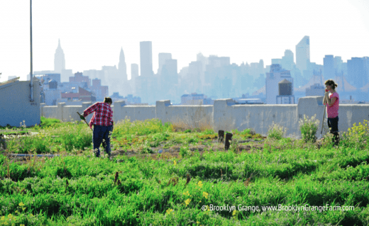 Brooklyn Navy Yard farm gardening