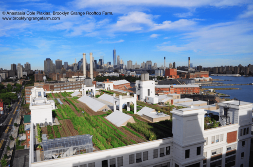 Brooklyn Navy Yard farm