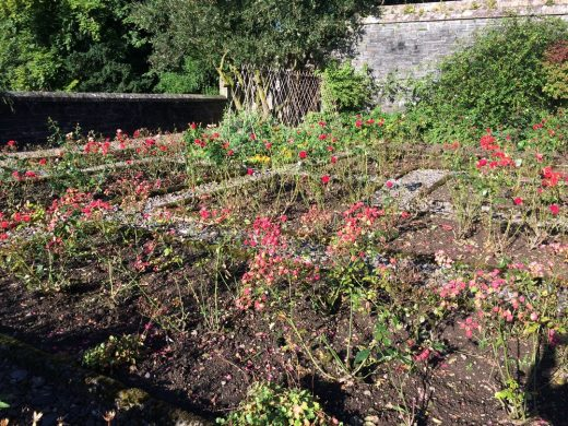 Arisaig House rose garden