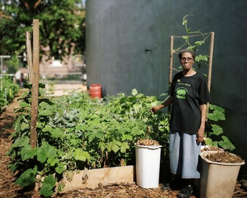 Urban Agriculture Plan - Design Trust for Public Space