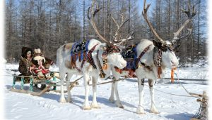 Tourism Cluster in Oymyakon reindeers Russia