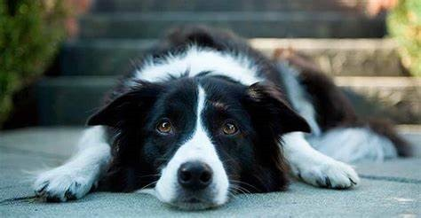 CBD Oil and How It Can Help Fight Epilepsy in Dogs