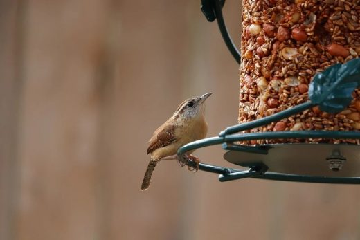 How to Get the Best Out of Your Garden in Lesser Lockdown bird