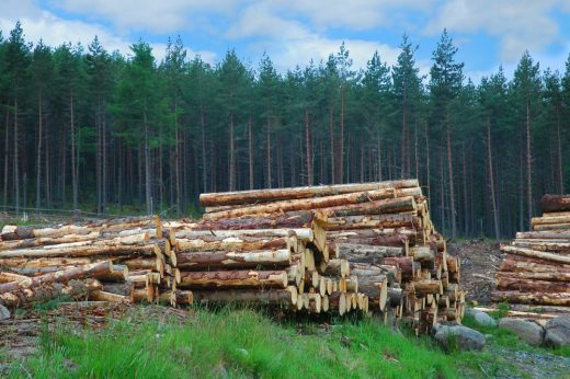 Scottish Timber logs wood