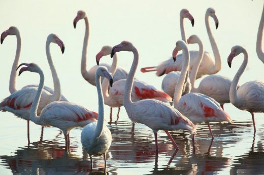 WWF Observation Cabins Competition site - Orbetello Italy nature - birds