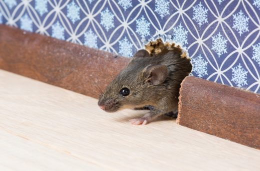 8 Property Maintenance Tips To Prevent Pests